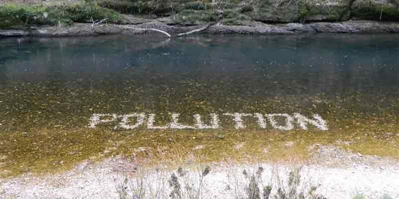 Algues brunes sur le Dessoubre